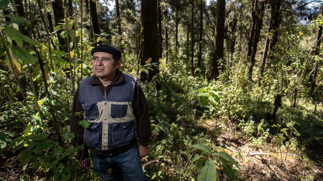 Cuauhtemoc Saenz Romero Forest Geneticist Trying To Move An Entire Forest