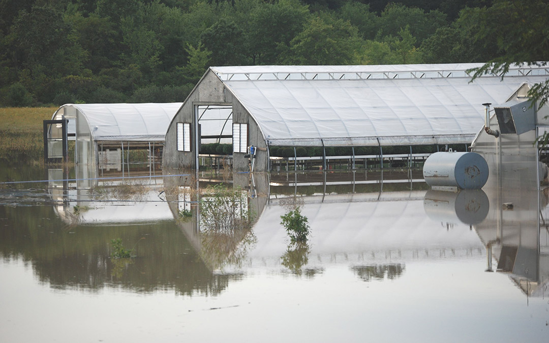 Flooded Greenhouse