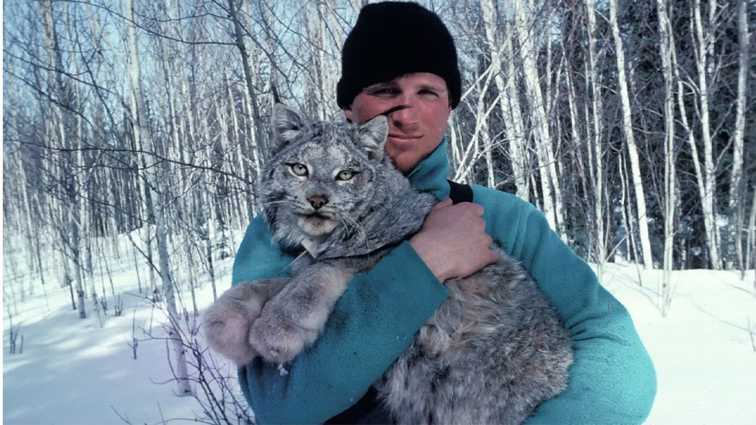 Paul Nicklen Releases A Wild Canadian Lynx That Has Been Fitted With A Radio Collar