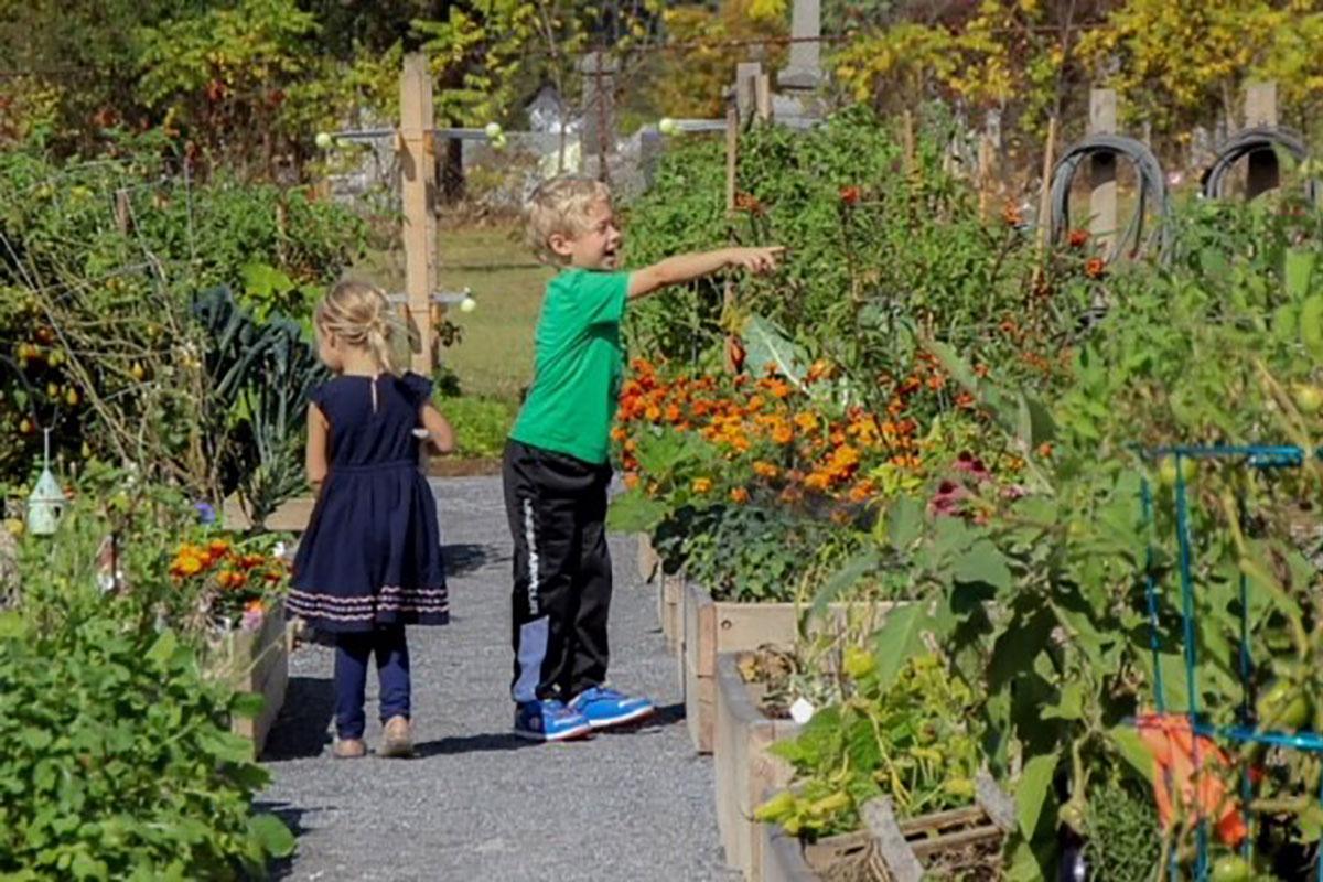 Two kids picking veggies