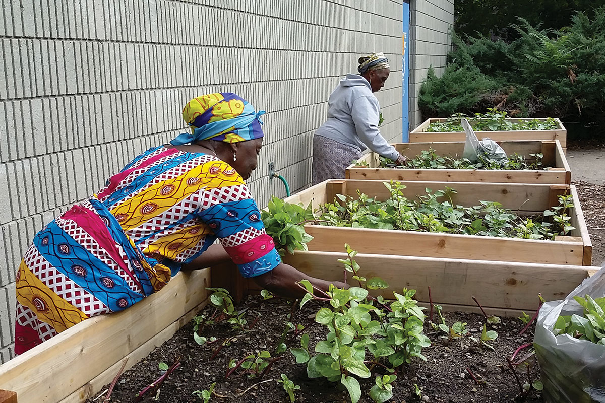 healthy food for low-income, urban and immigrant Providence residents
