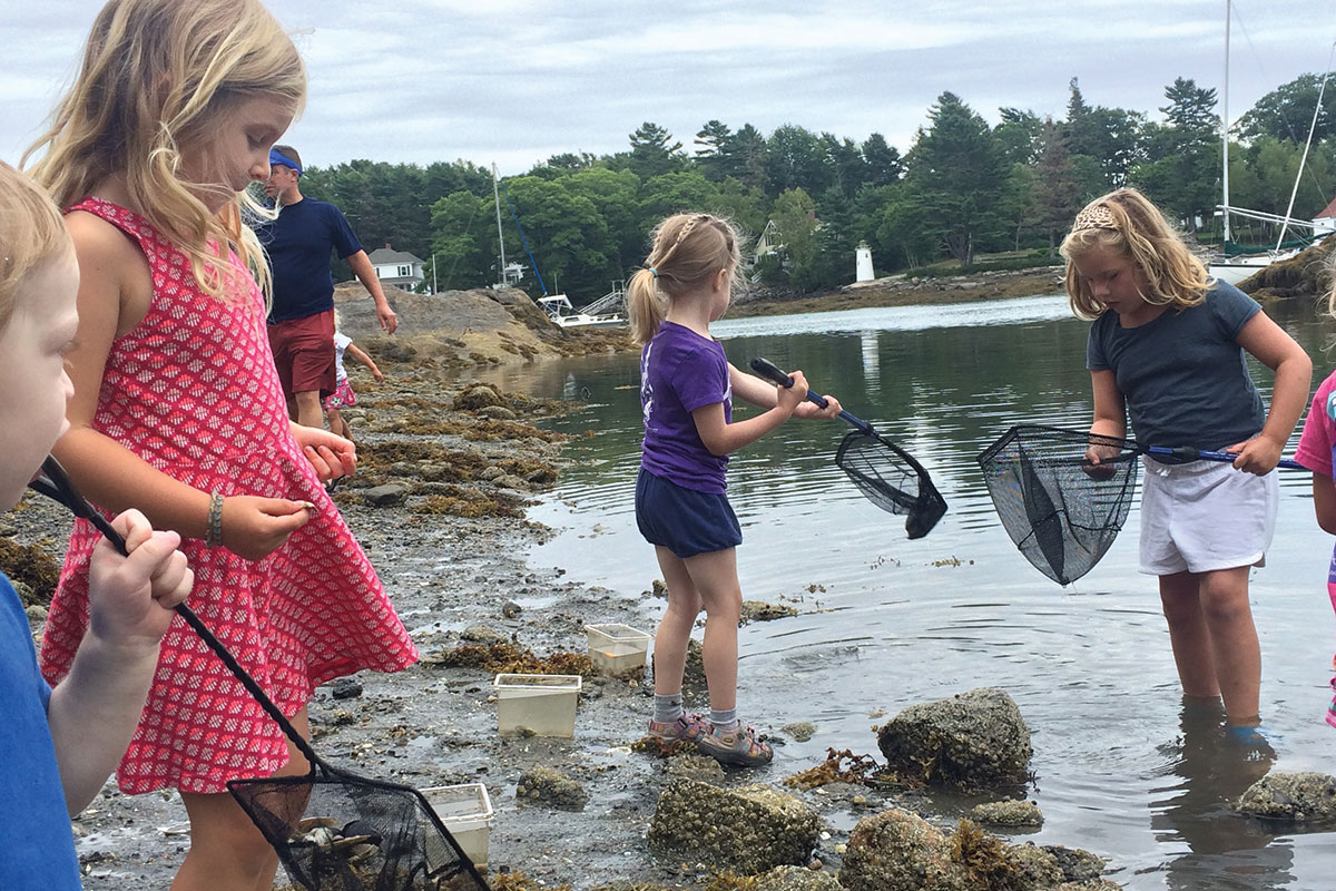 finding critters along the shoreline