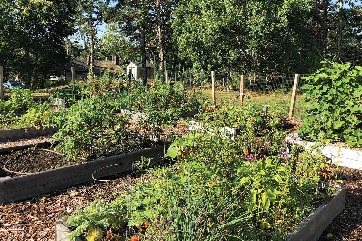 17-plot community garden