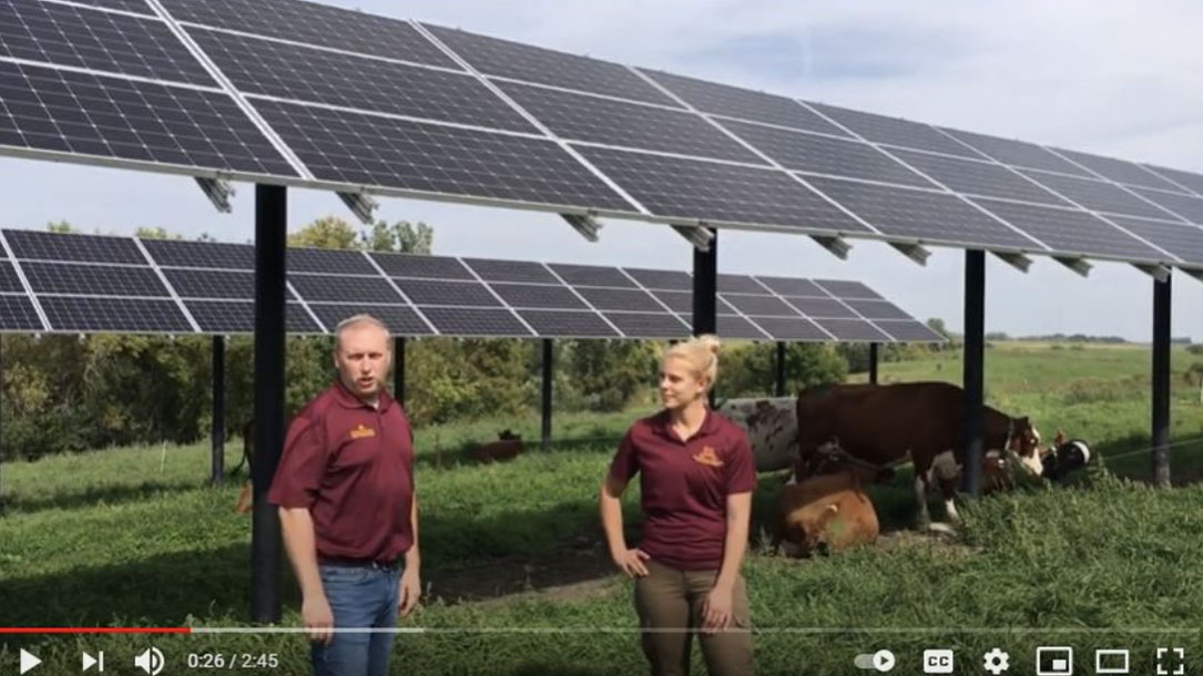 Ag Cows Solar Shade