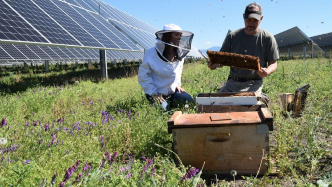 Beekeepers On Solar Farm