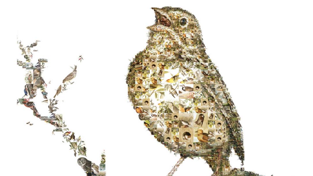 Bird Collage Of Birds