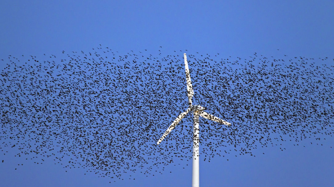 Bird Flock Over Windmill