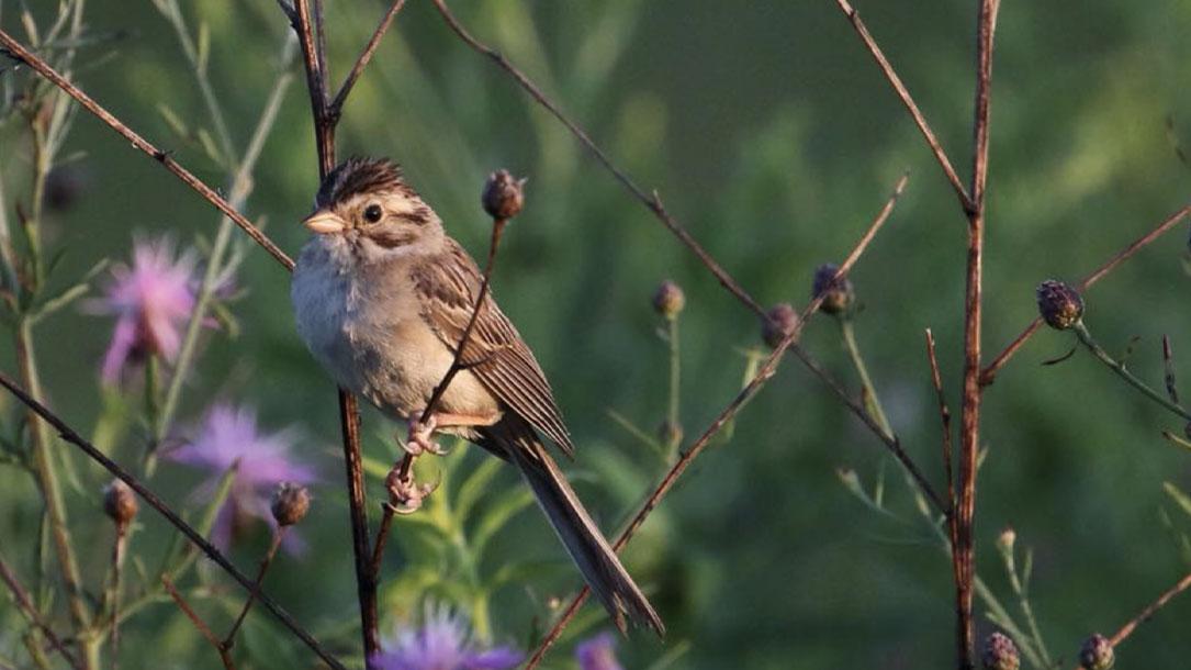 Bird On Woody Stalk