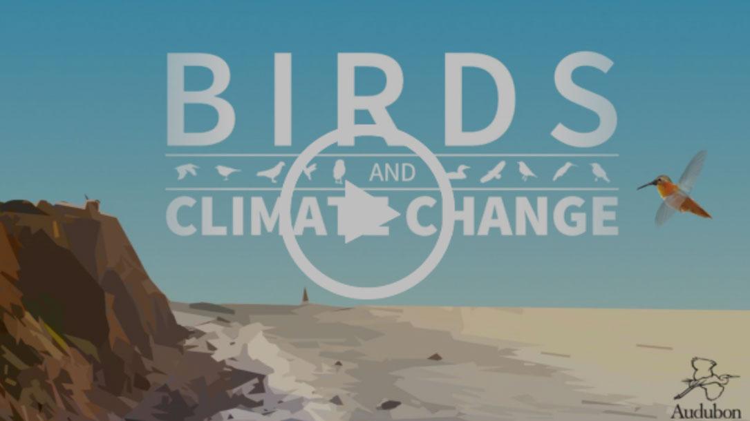Bird Video Screenshot