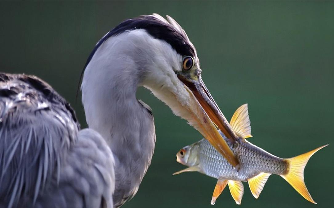 bird-with-prey