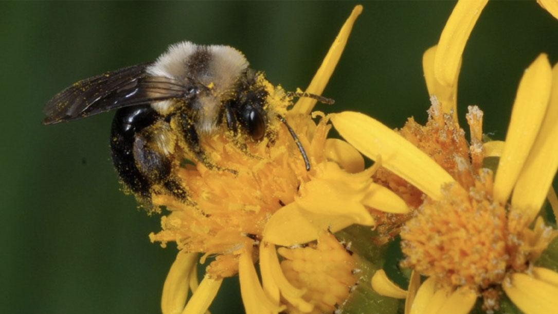 Bumblebee One