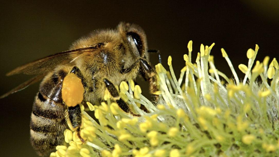 Bumblebee Two