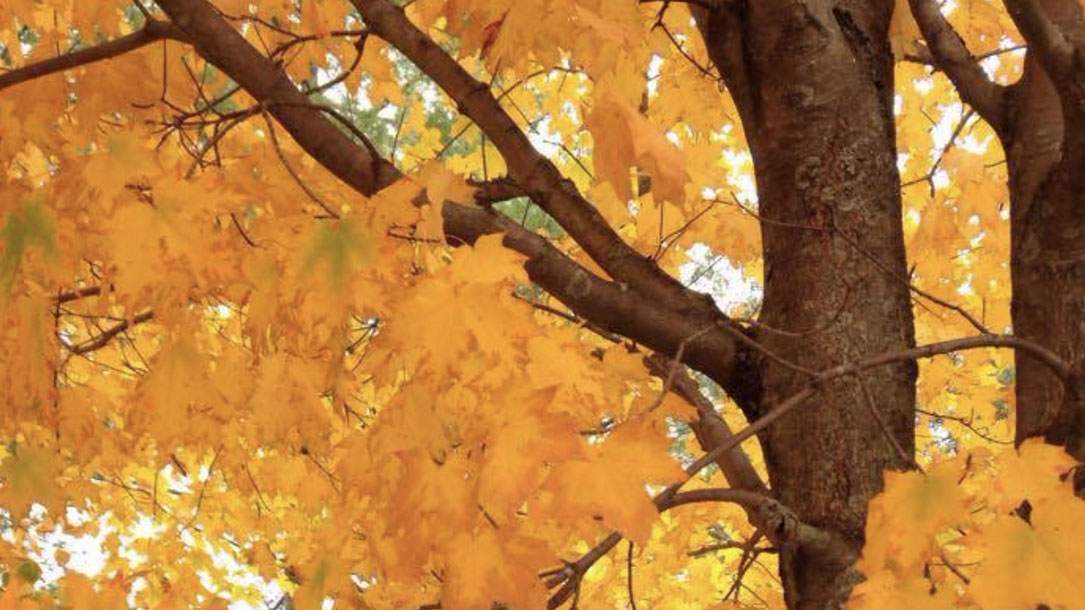 Fall Foliage In The Neighborhood