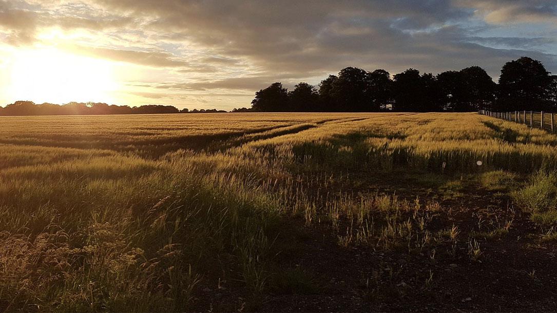 Farmland Low Sun