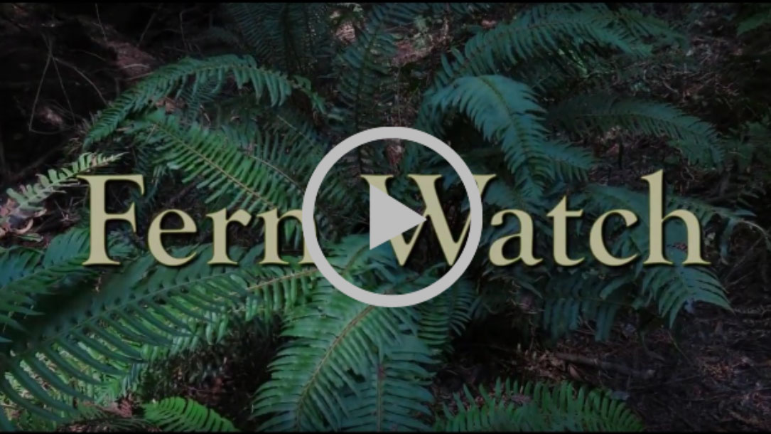 Fern Watch