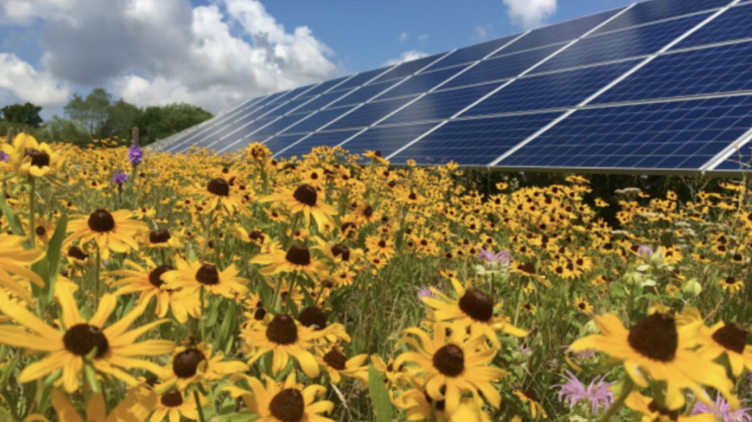 Flowers And Solar