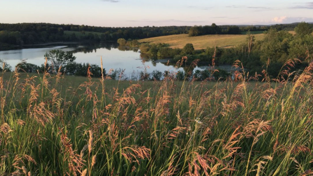 grasses-and-pond-at-dusk