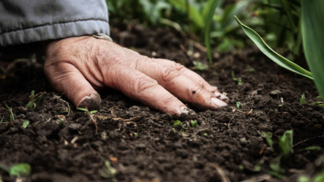 Hand On The Soil