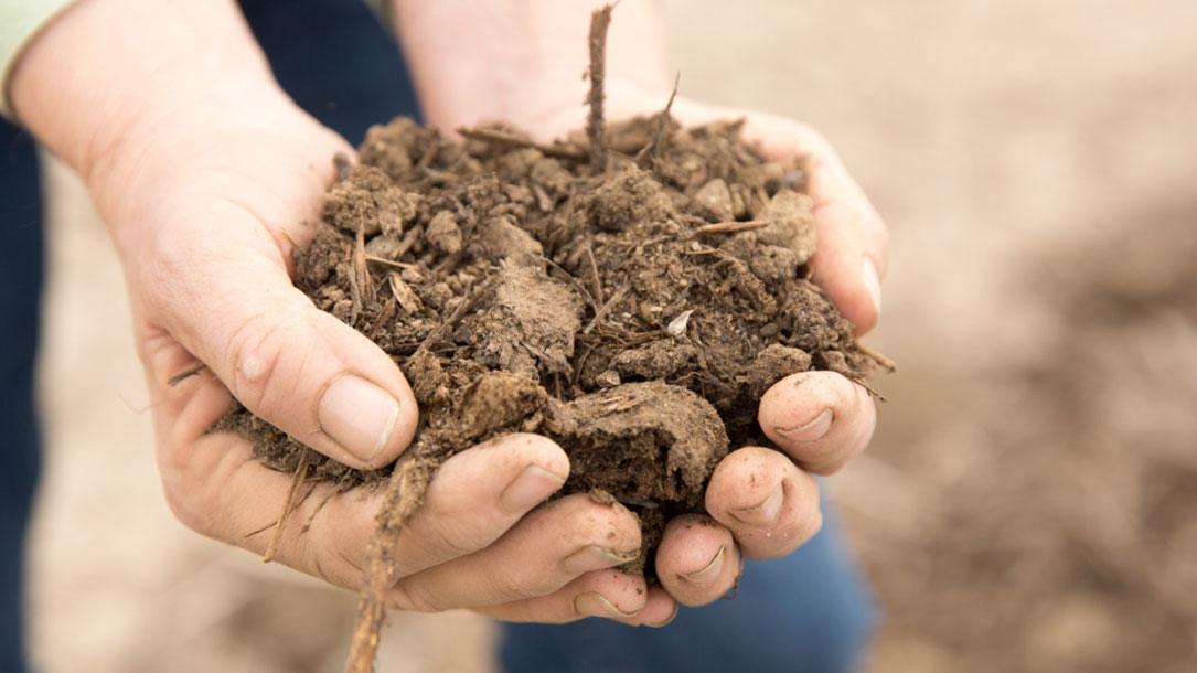 Handful Of Top Soil