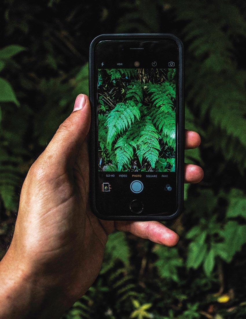 image of ferns on phone