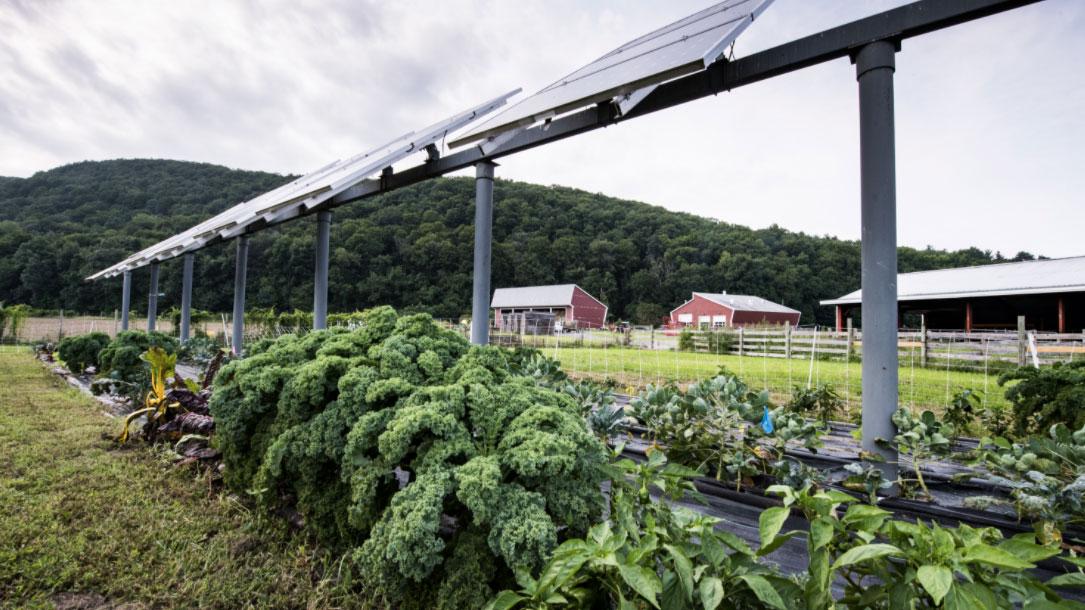 Kale Under Solar