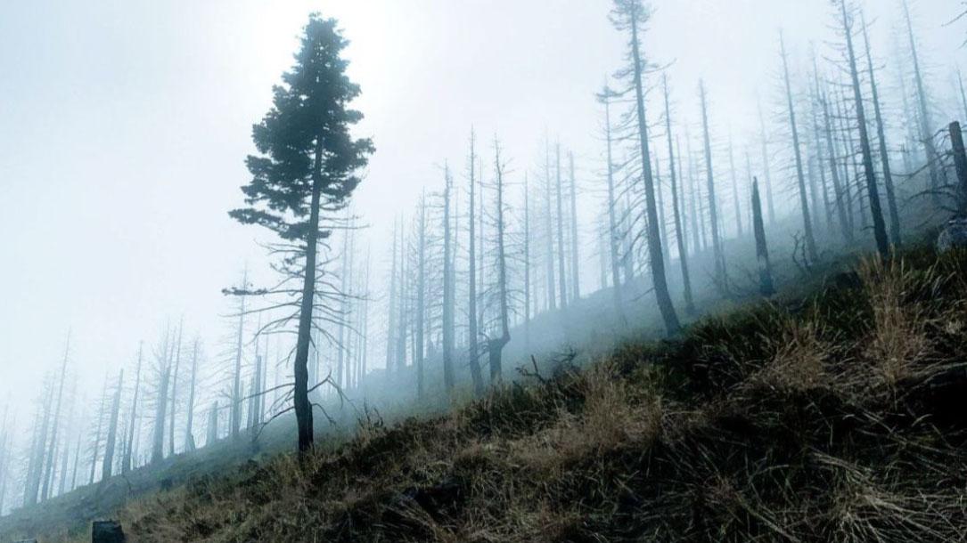 Misty Hillside