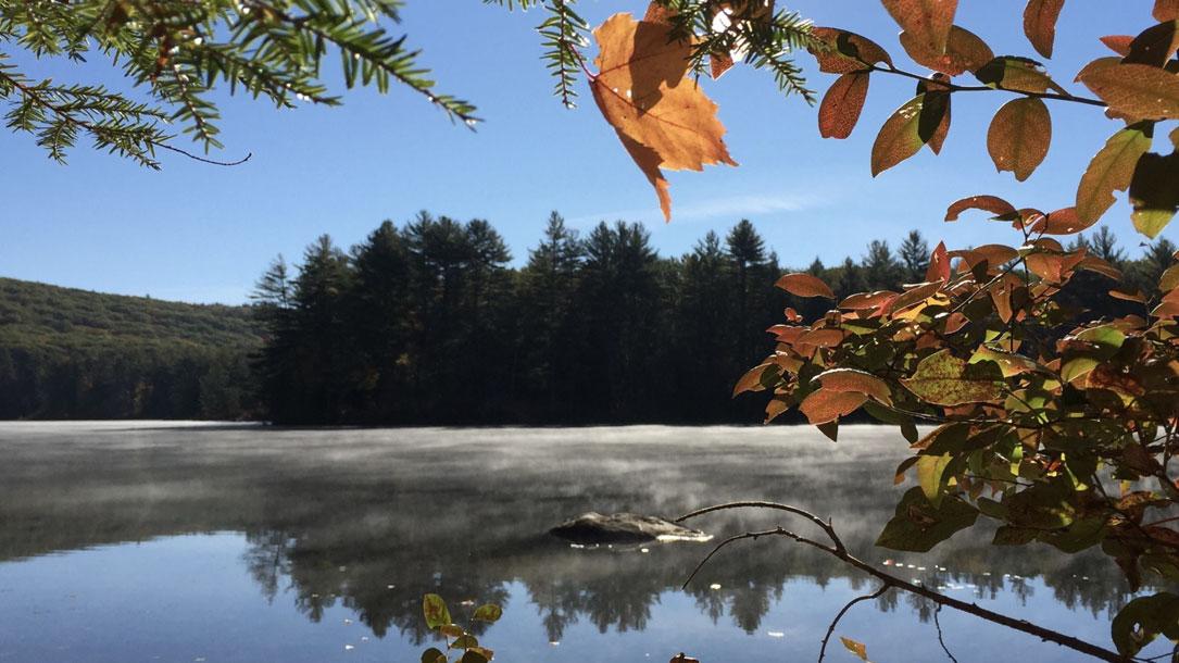 Peeking Through Foliage To The Lake