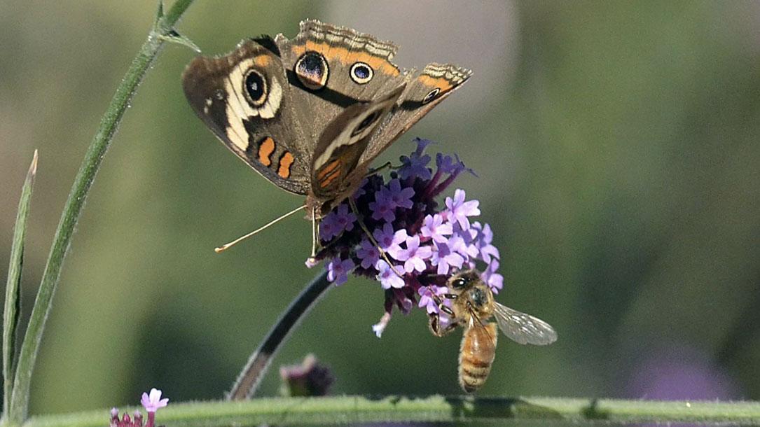 Pollinator Pair