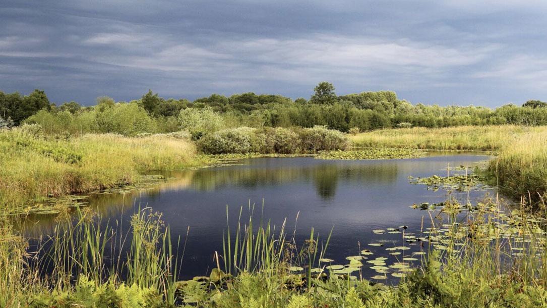 Pond Wetland