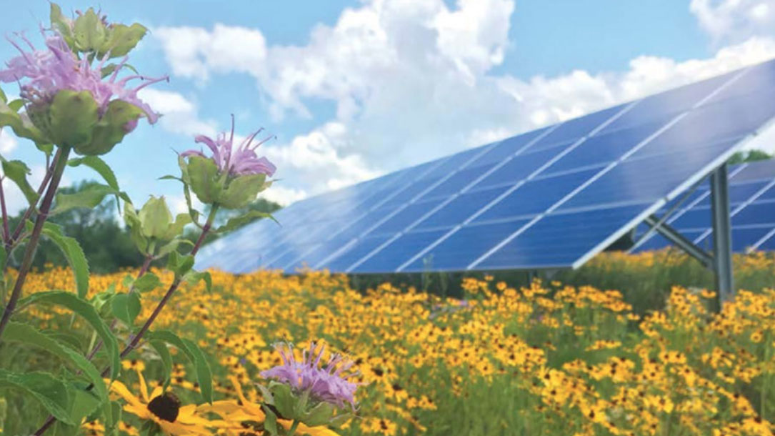 Purple Flowers And Solar Panels
