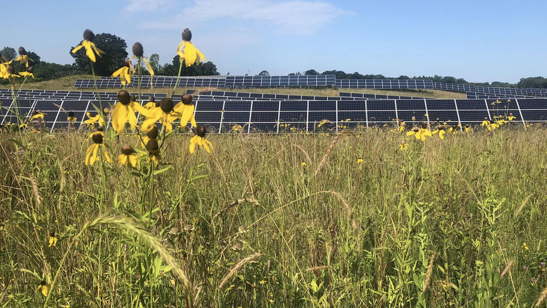 Solar And Flowers