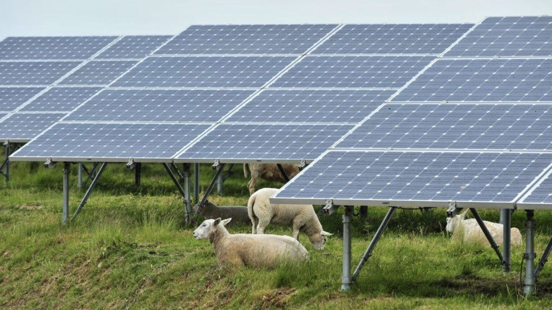 Solar And Sheep