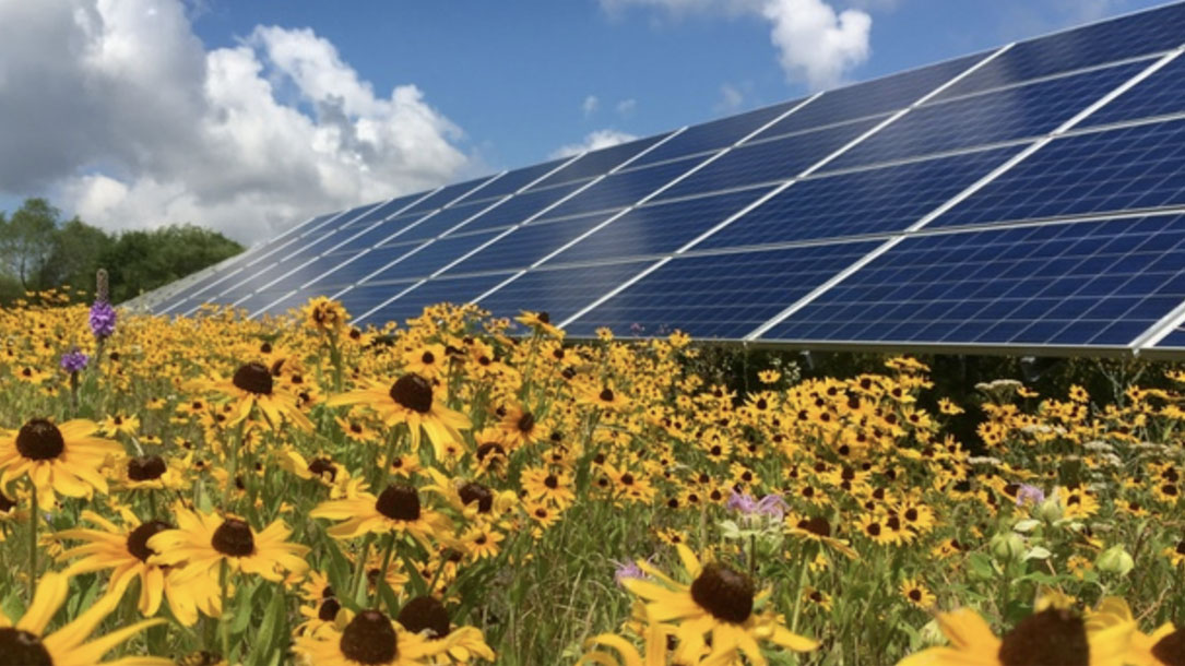 Solar And Sunflowers