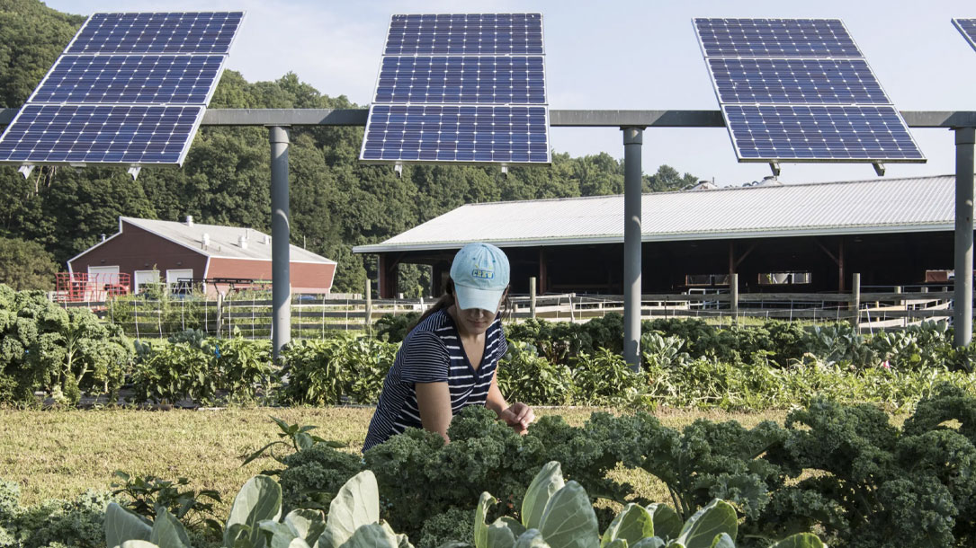 Solar Farmer And Kale