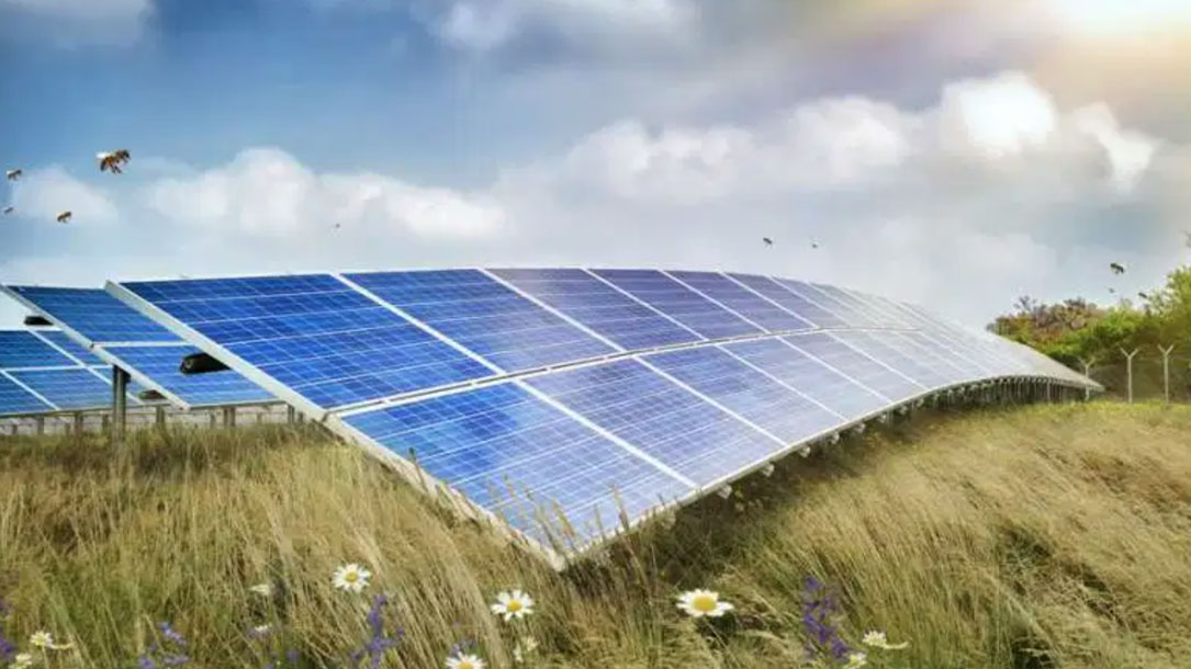 Solar Panels For Pollinators