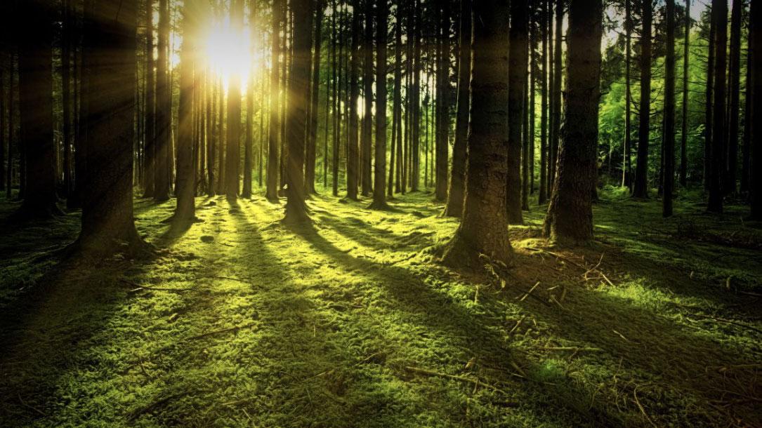 Sunbeam Through Mossy Forest