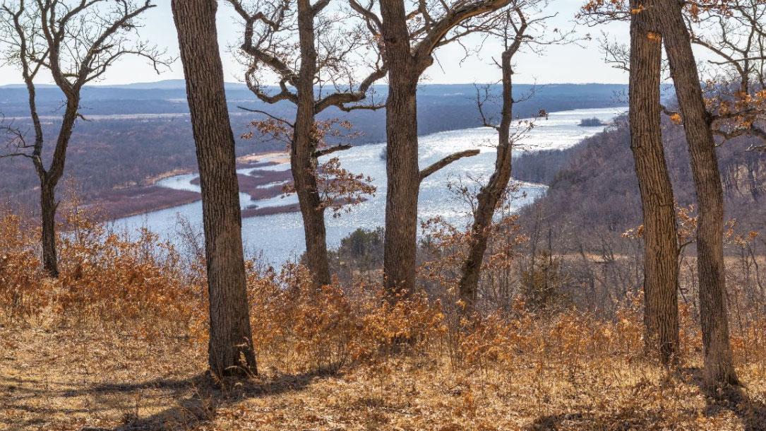 Tree Overlook