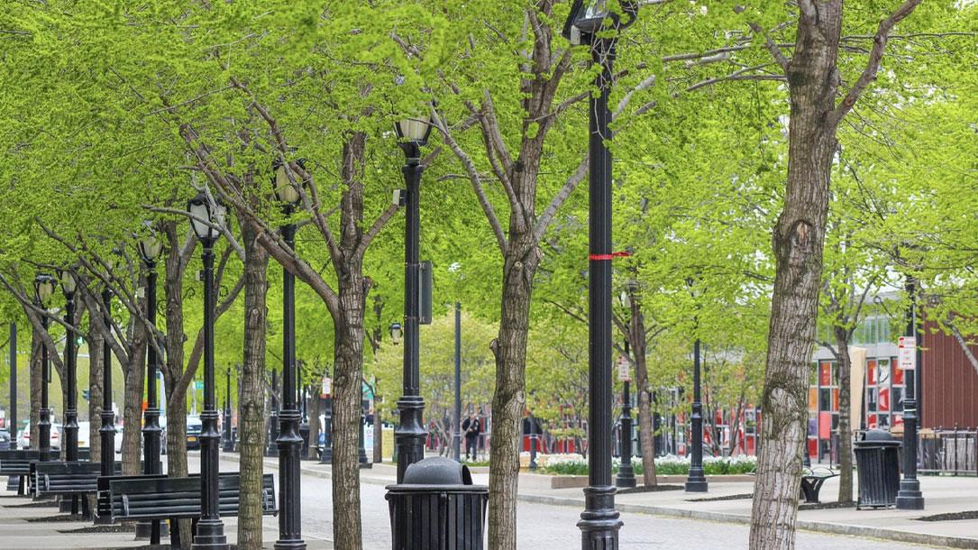Walk Boulevard Trees