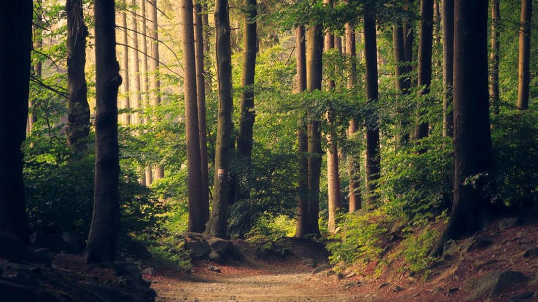 Woodlands Unsplash Lukasz Szmigiel